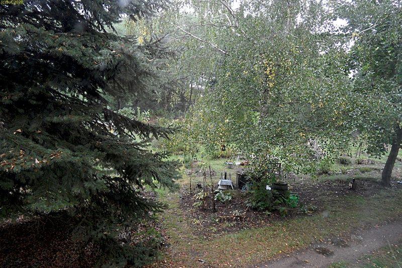 "Beet ""Birke"" im Regen 26.9.20"