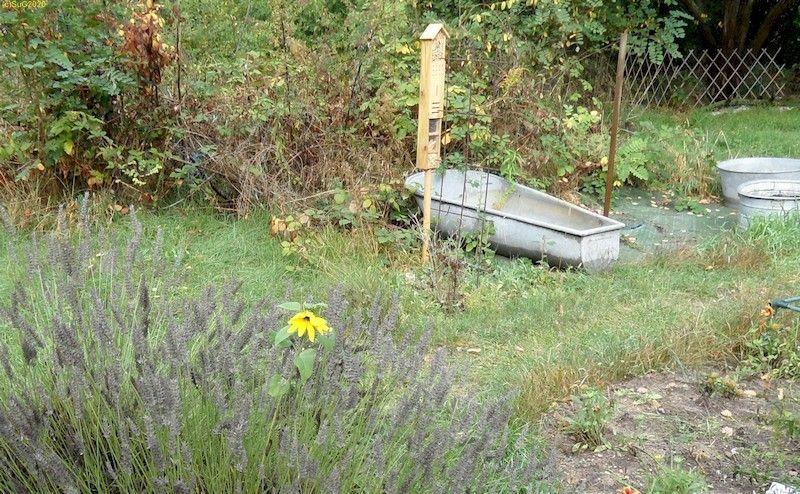 """Sonnenblume im Lavendel Beet """"Acht"""" Und das neue Insektenhotel 27.9.20"""