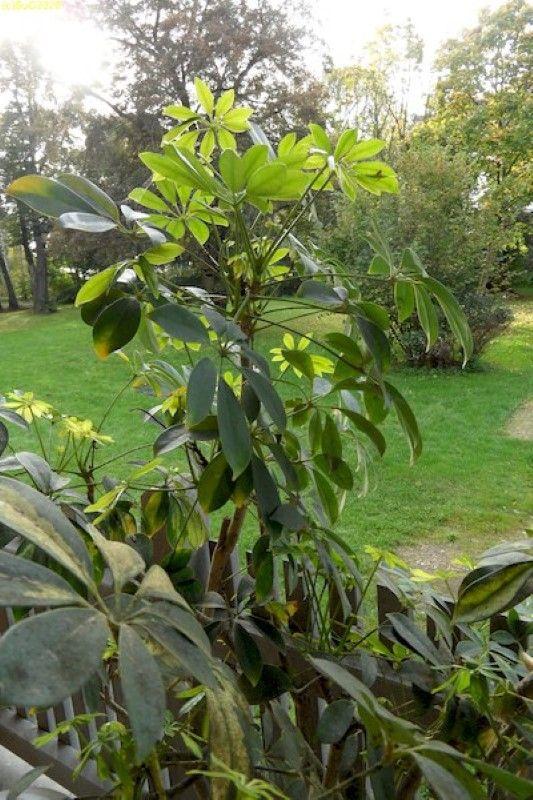 Zimmerpflanze auf der Terrasse 12.10.14