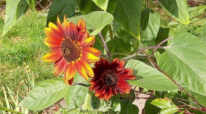 Beitrag über unseren Garten Nummer 700