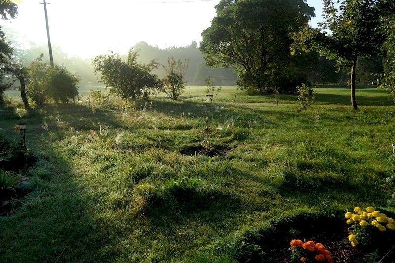 Gartenblick nach Osten mit den Forsythien September 2013