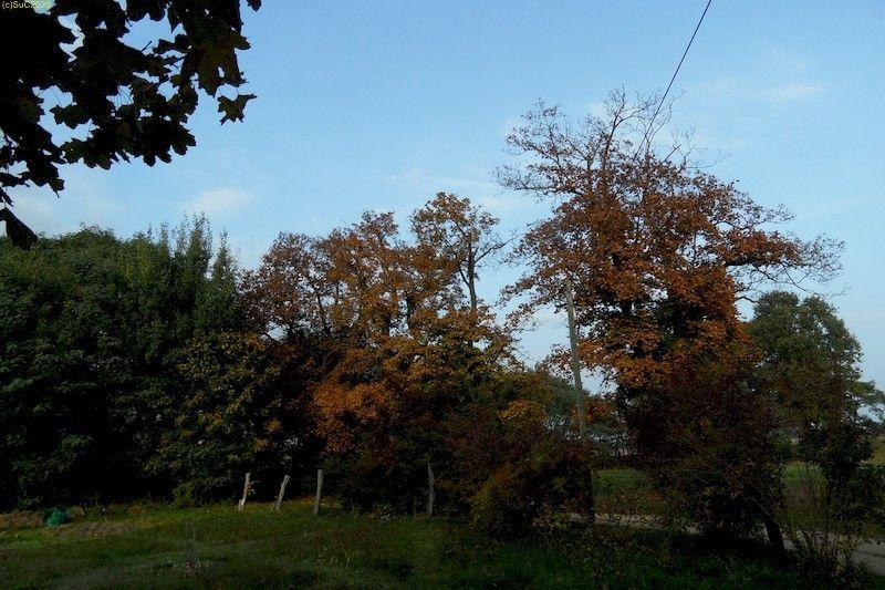 Abendliche Blick nach Nordosten Oktober 2013