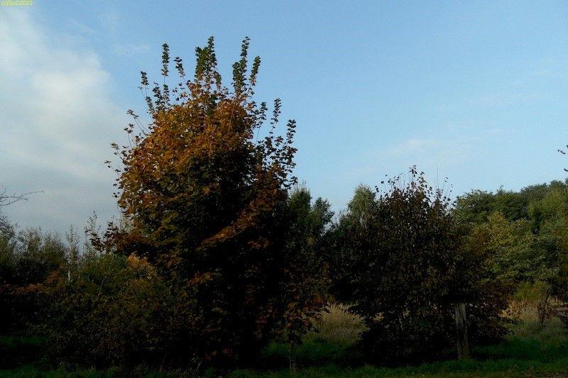 Blick nach Norden Oktober 2013