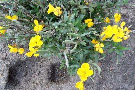 Gelbe Blüten 44. Kalenderwoche 2014