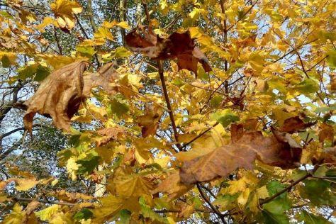 Gelbe Herbstliche Agorn-Blätter 44. Kalenderwoche 2014