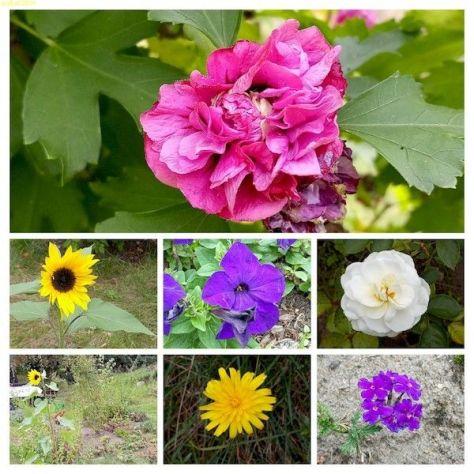 Blüten 38, Kalenderwoche 2021