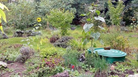 Sonnenblumen, Schnittlauch, Majoran, Oregano 29.9.21