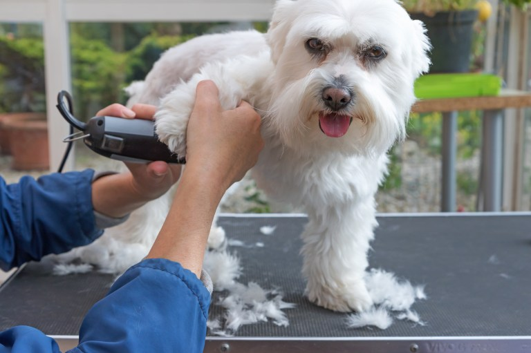 Top 5 Dog Grooming Tips For Short Hair