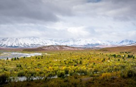 POW: Fall colours and Snowy Mountains in Denali.
