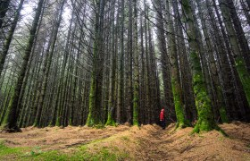 POW: Lost in the Forest of Arran