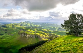 POW: Rolling Green Hills from Te Mata Peak