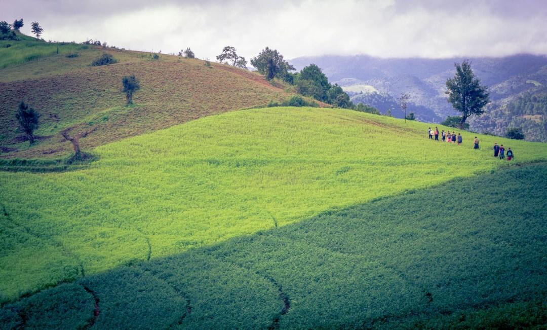 Hikers walking through fields in Myanmar