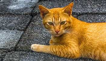 70 Ginger Cat Names Cute Hilarious Names You Ll Love