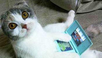 Game of Thrones Cat Names - 80+ Fantastic Names - Find Cat Names