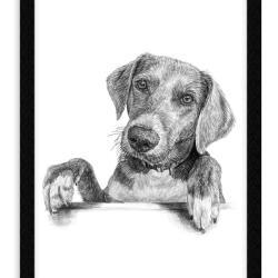 Tegning af dyr - Portrættegning efter dine fotos