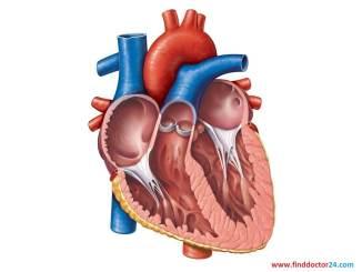 heart specialist doctor near me