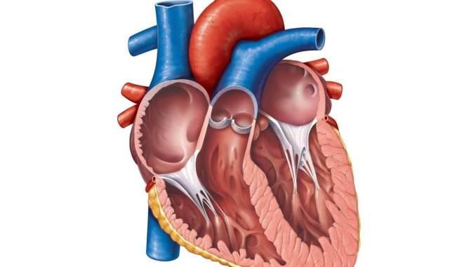 Khulna Cardiology Doctor