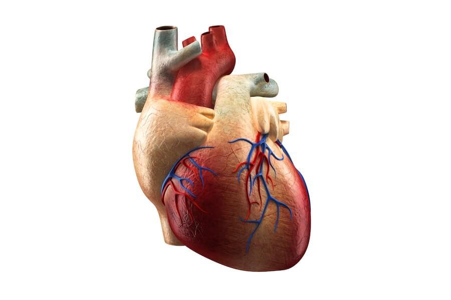 Comilla Cardiology Specialist