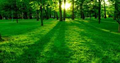 What is Greenism? Pros and cons of the Green Movement