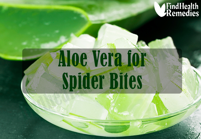 aloe-vera-for-spider-bites