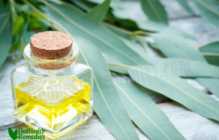 Eucalyptus Oil for Ticks