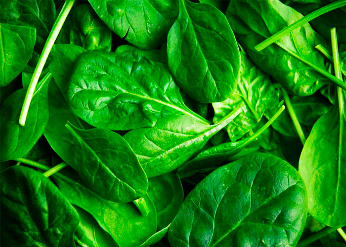 Spinach for Increasing Breast Milk