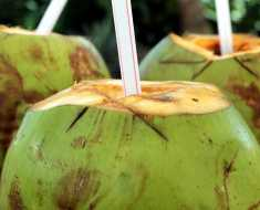 Sugar Free Drinks - Coconut Water