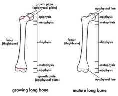 Growth Plates both