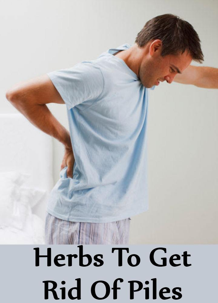 Herbs To Cure Piles