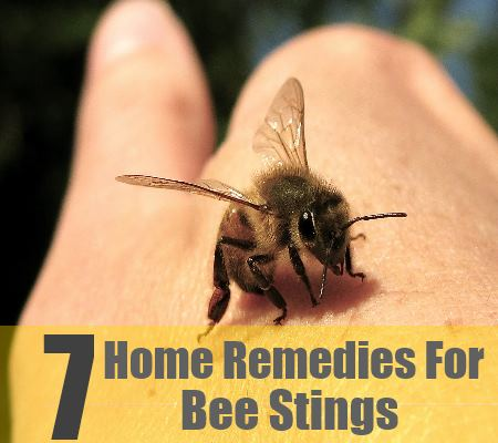 7 Home Remedies For Bee Stings