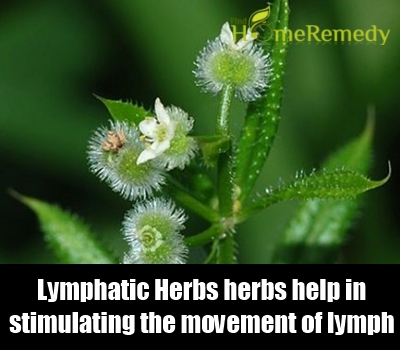 Lymphatic Herbs