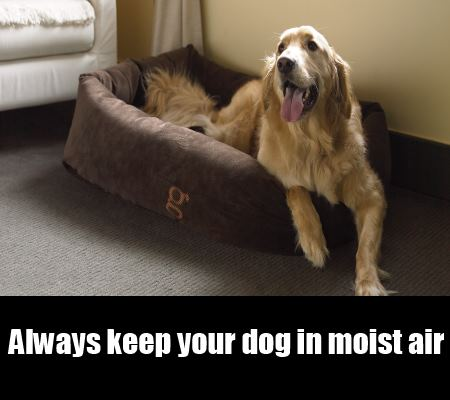 Keep Your Dog In Moist Air
