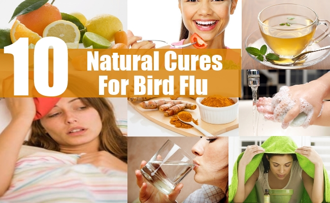 Natural Cures For Bird Flu