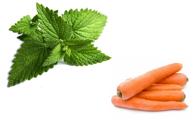 Carrots And Peppermint For Nausea