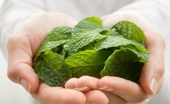 Treatment With Peppermint