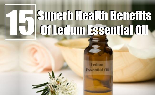 Health Benefits Of Ledum Essential Oil