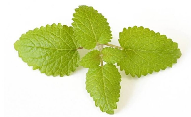 Get Helped By Lemon Balm