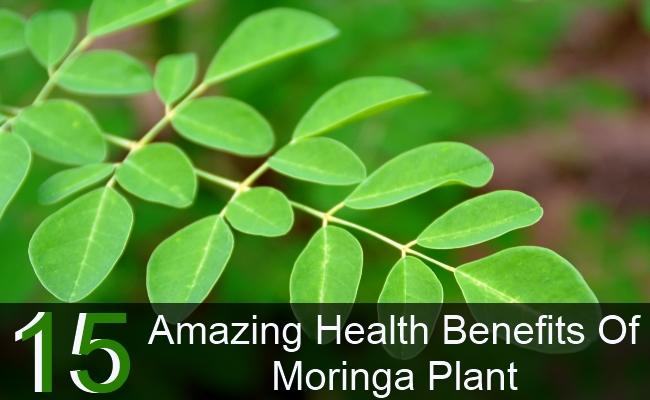 15 Amazing Health Benefits Of Moringa Plant