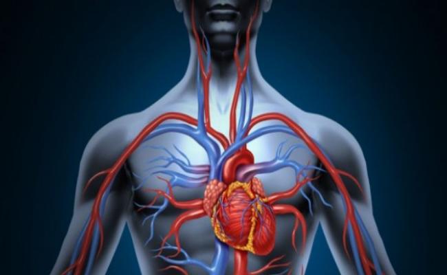 Increases Blood Circulation