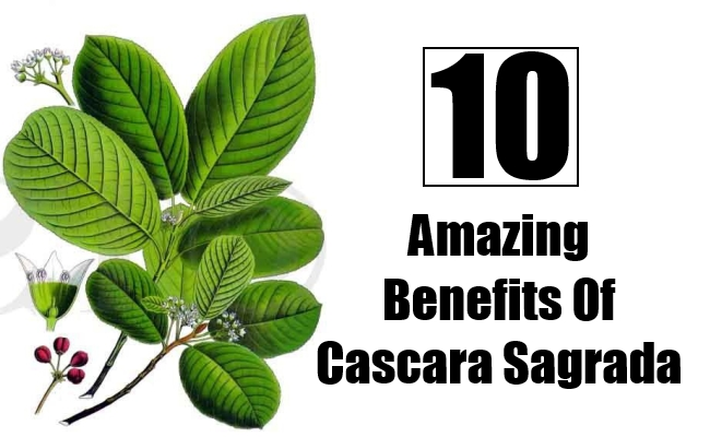 Amazing Benefits Of Cascara Sagrada