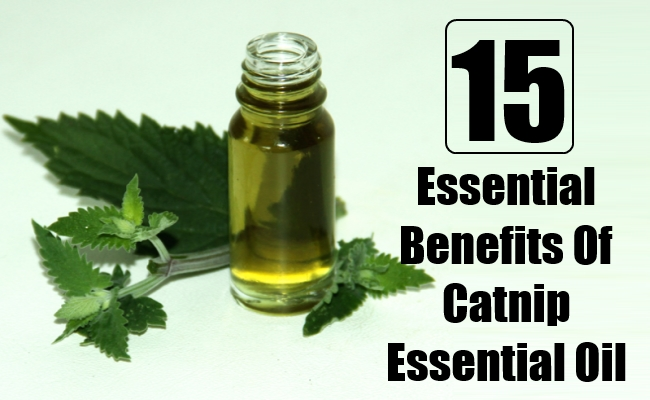 Essential Benefits Of Catnip Essential Oil