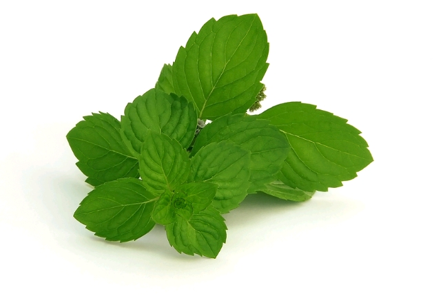 mentha-spicata-or-spear-mint-infusion