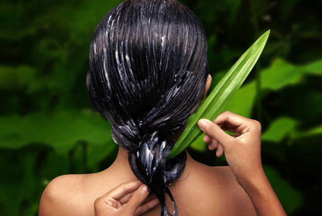Aloe Vera As A Hair Boon