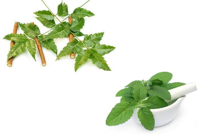 Basil And Margosa Face Pack For Acne Prone Skin
