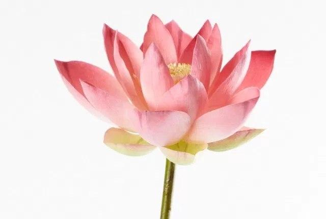 Lotus Almond Mask