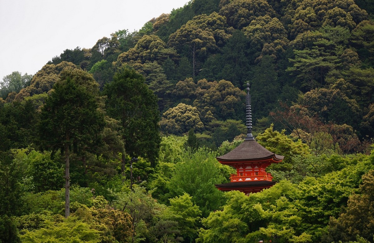 Forest Bathing: Take a Plunge in Kyoto's Life-enriching Forests