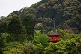 Forest Bathing: Take a plunge in Life Enriching Forests in Kyoto