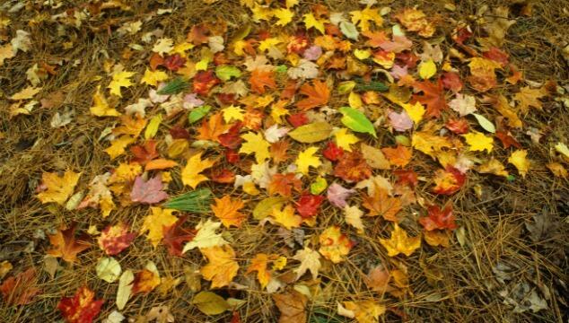 The Seasons of Homeschooling