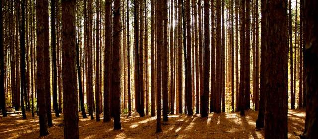 The Brown Forest
