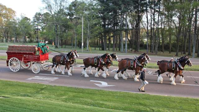 Clydesdales Returning to Fondren